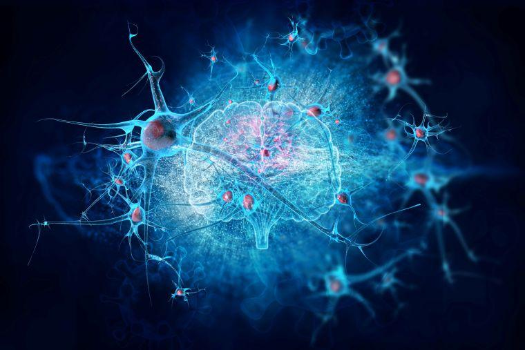 Brain stems, brain image and coronavirus cells