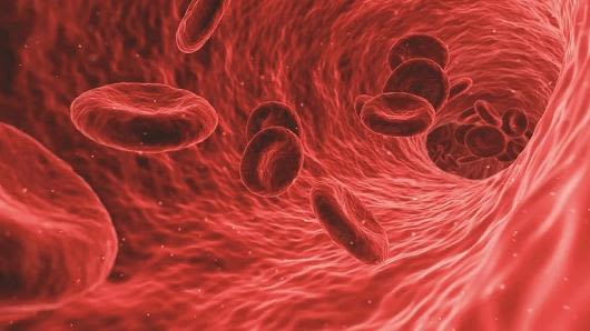 Scientific animation of blood cells inside the lumen of a blood vessel