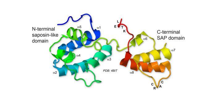 Cerebral dopamine neurotrophic factor