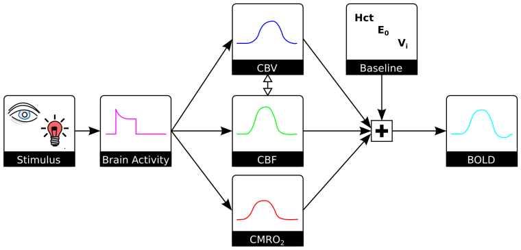 Flow chart of FMRI Physiology