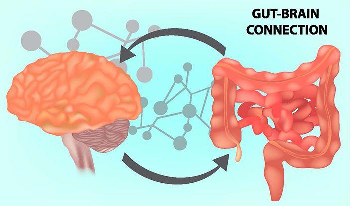 Gutbrain