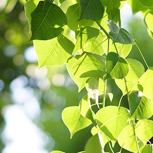 Leaves on a tree with sunlight