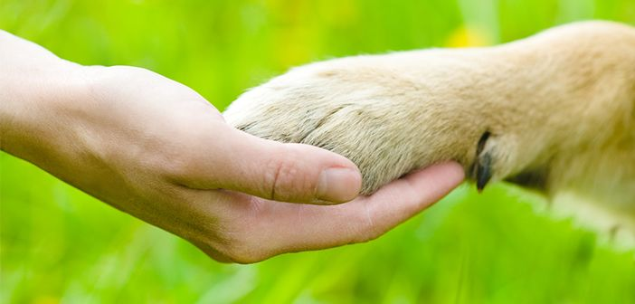 Role of pets often neglected by researchers
