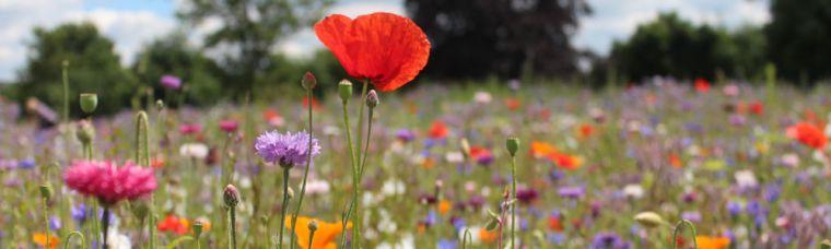 Warneford meadow1000x300.jpg