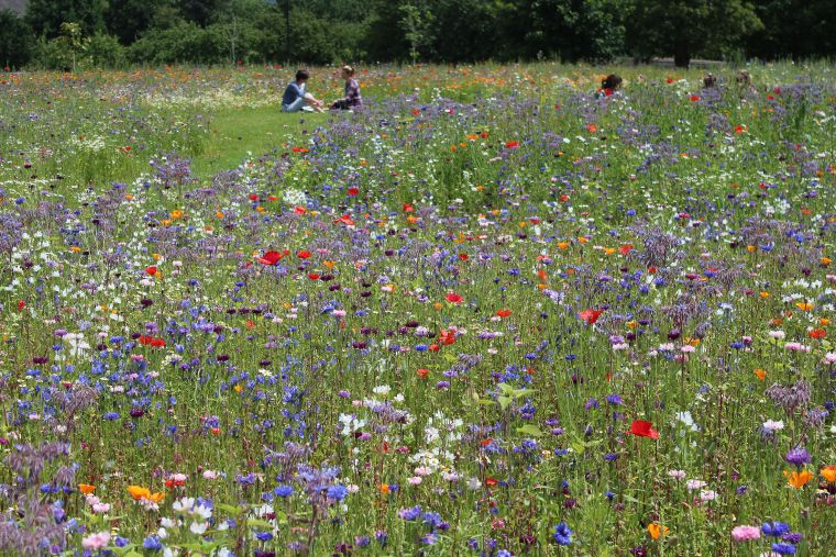 Wild flowers growing in the Warneford meadow, with people sitting in the background