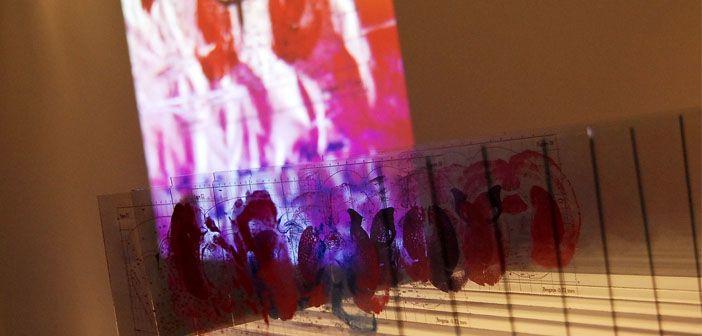 'An Emerging View' – Agnieszka Tamiola