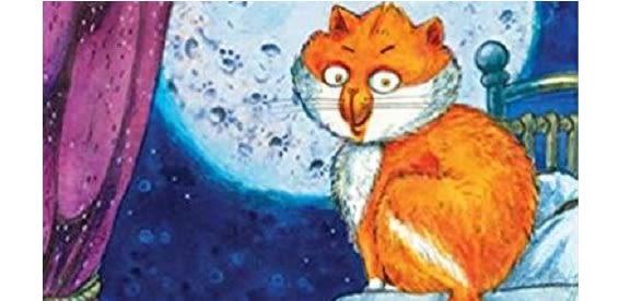 Night time cat