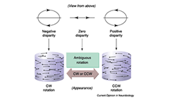 Changing perception through electrical microstimulation in cortical area v5 mt