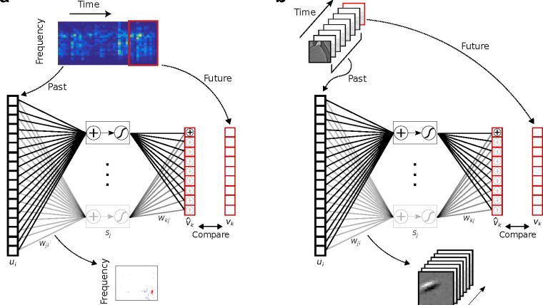 Sensory cortex is optimised for prediction of future input