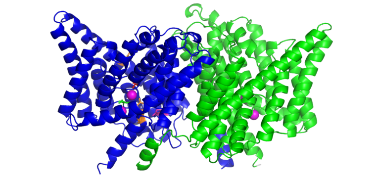 Crystal structure of the bacterial CLC antiporter ClC-EC1 (Dutzler et al., Nature 2002)