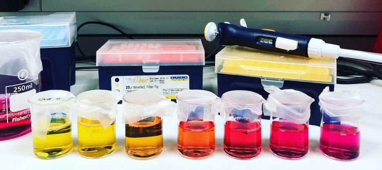 Swietach cell culture image