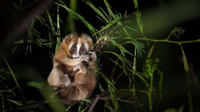 New study discovers the impact of environment on sleep patterns in wild primates