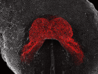 Richard tyser awarded runner up position in bhf image competition