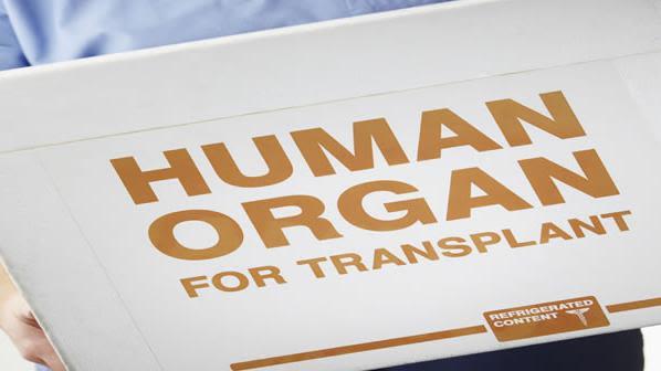 Professor of transplantation wins inaugural clinical science award