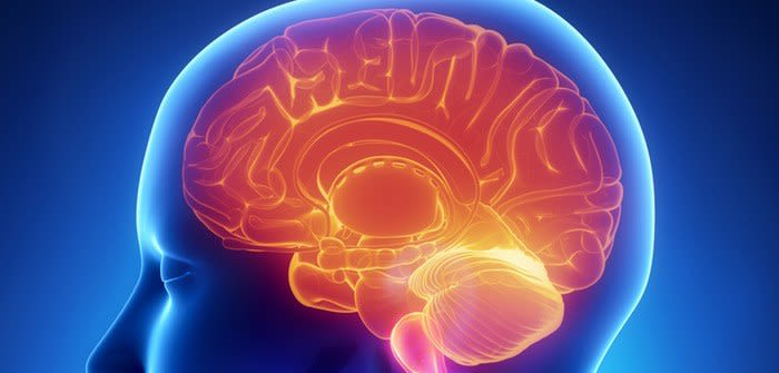 Neuroinflammation meeting