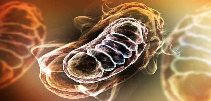 Digital illustration of Mitochondria