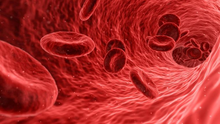 A 3D graphic of red blood cells flowing through a blood vessel.