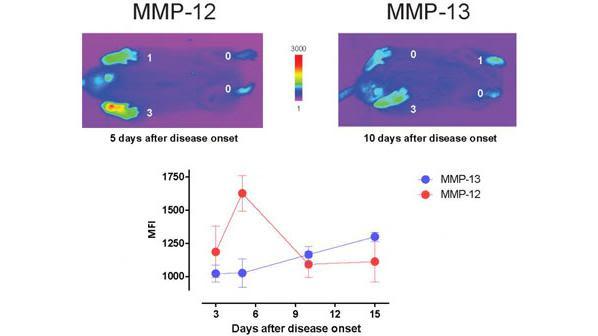Lim Group | Molecular Imaging Group