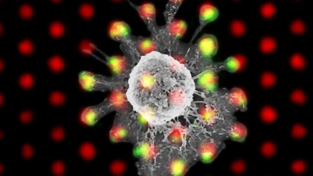 Geometry is key to t cell triggering