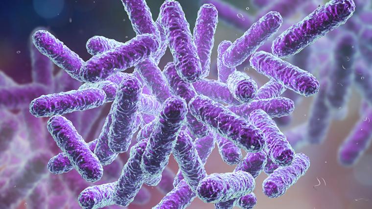 Dietary fibre metabolite helps immune system fight invasive bacteria