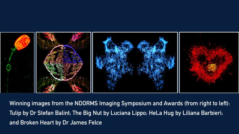Ndorms imaging symposium and awards 1