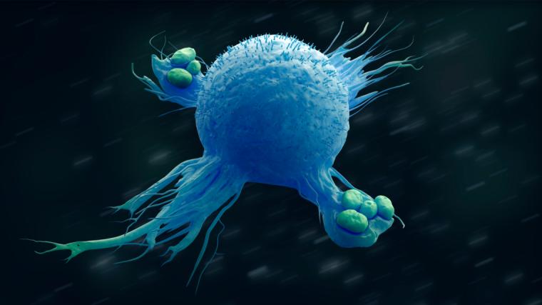 Macrophage engulfing bacteria 3d illustration
