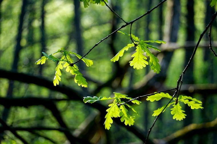 Leaves in sunlight