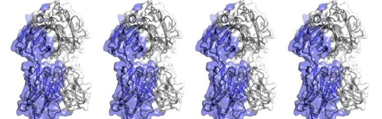 Antibodies are the key molecules in human immune responses. Currently, the process of engineering antibodies for use in therapeutic drugs involves steps that are costly in time and resources.  Professor Charlotte Deane's group at the University of Oxford's Department of Statistics have developed a computational platform that can streamline the process.