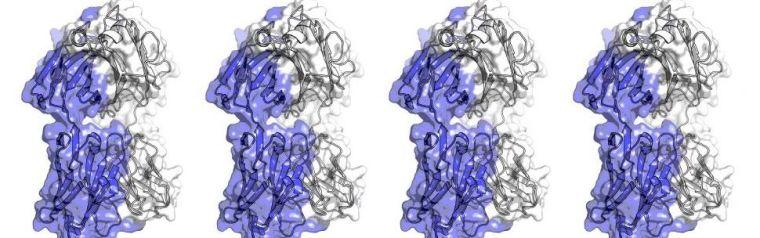 Computer models of antibodies