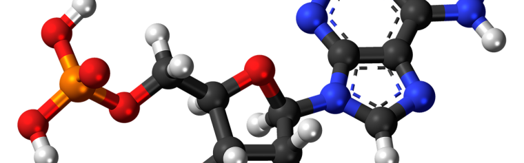 A model of the chemical structure of a nucleic acid