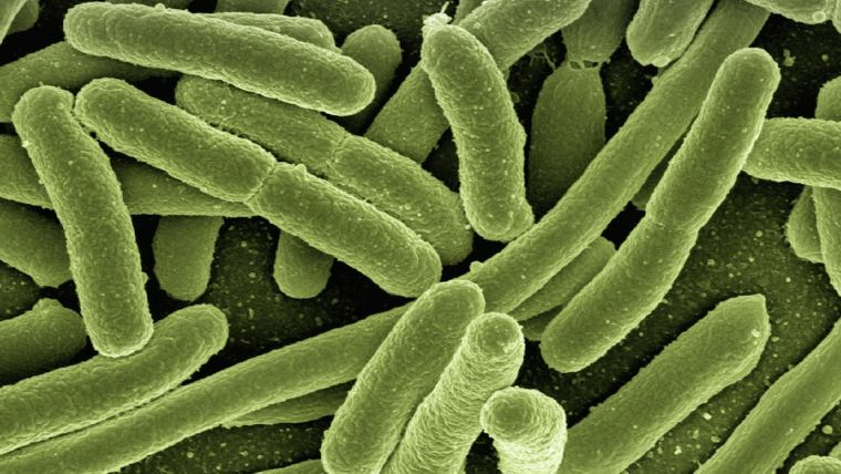 Science blog how can evolutionary biology help to get rid of antibiotic resistant bacteria