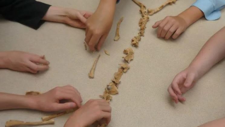 Children's hands assembling a skeleton