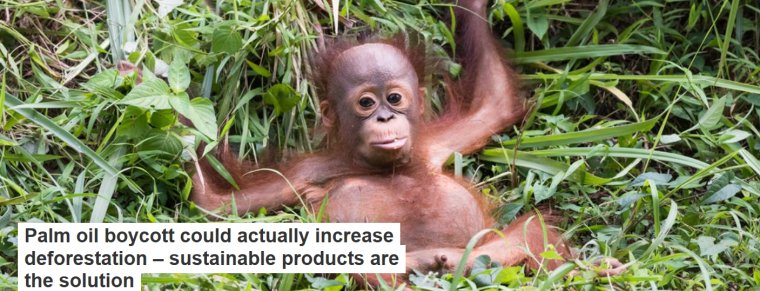 Palm oil boycott could actually increase deforestation 2013 sustainable products are the solution