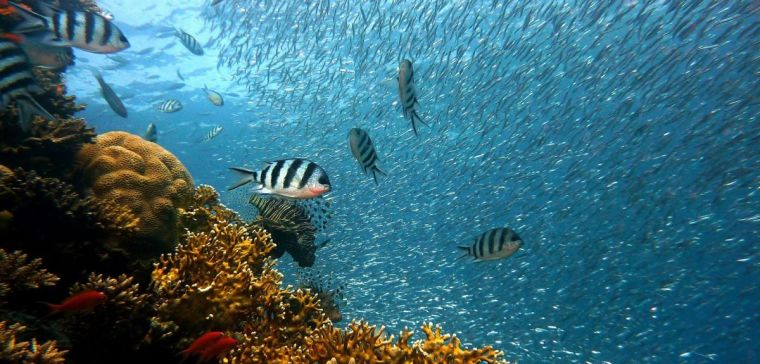 A coral reef with fish