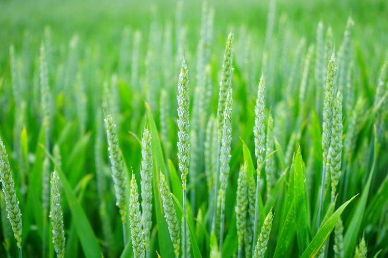 Seeding a new green revolution