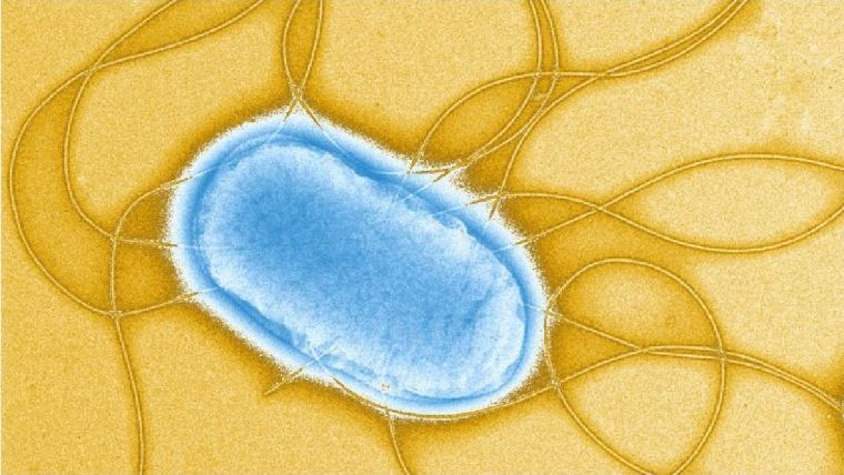 New research makes progress towards general salmonella vaccine