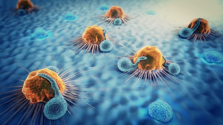 Immune cells and cancer cells