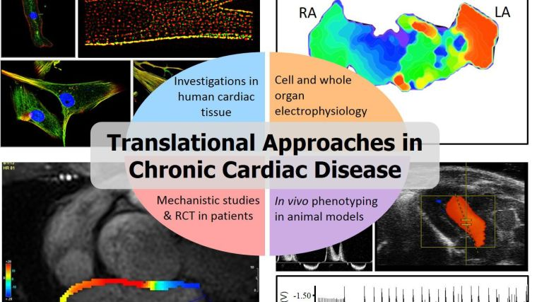 Our programme of work aims to understand nitric oxide (NO) and redox signalling in healthy and diseased myocardium, with a particular focus on atrial fibrillation (AF) and heart failure with preserved ejection fraction (HFpEF).  Building on the resources and original discoveries that we have made recently, we plan to test novel interventions that aim to correct the myocardial substrate that promotes the new onset of AF, or HFpEF, or prevent the adverse atrial remodelling that is induced by AF.