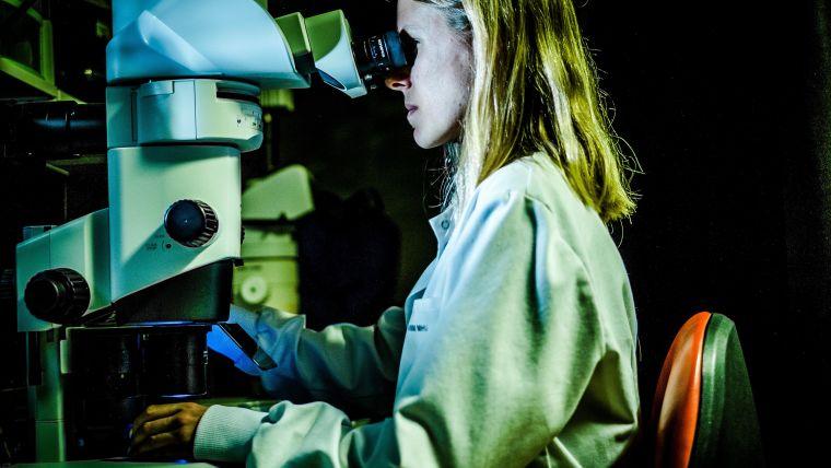 Woman working at microscope