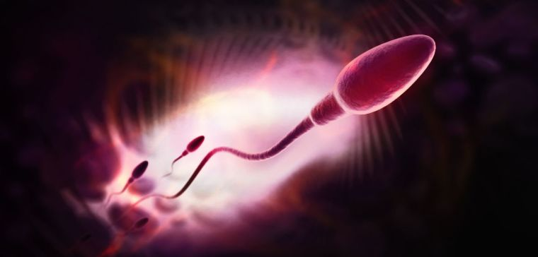 Oxford scientists have for the first time been able to identify the origins of some severe disease-causing mutations within the testicles of normal men. This discovery will help our understanding of how certain serious genetic disorders can occur in the offspring of healthy parents, who do not themselves have the genetic defect. The research is published in the journal PNAS.
