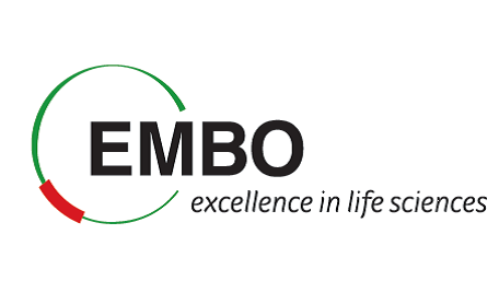 Logo of the EMBO Young Investigator