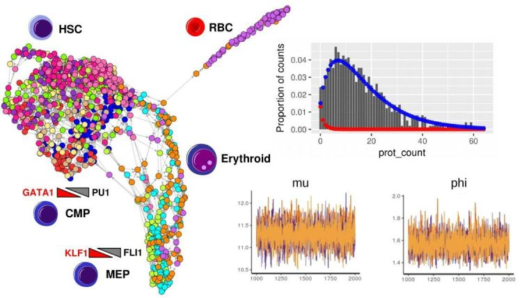 Dot and bar graphs
