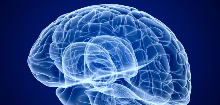 Get inside your own head during brain week