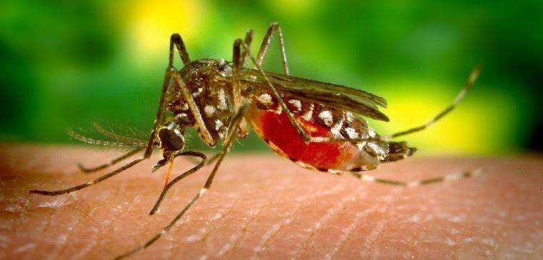mosquito-542156_1920_0.jpg