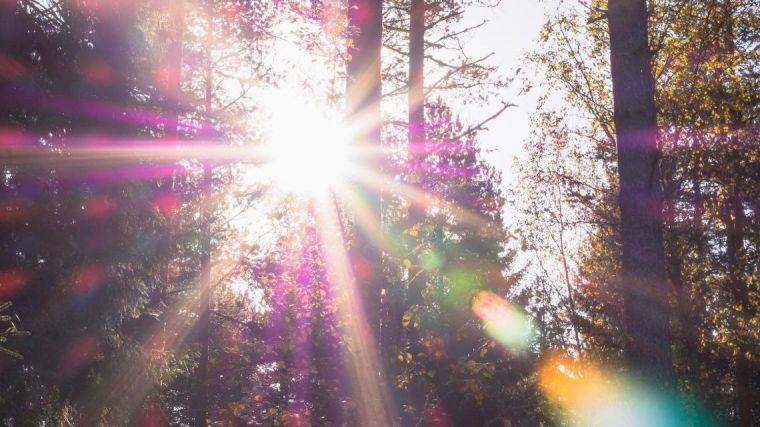Greater exposure to bright sunlight correlates with lower diabetes and heart disease risk indicators