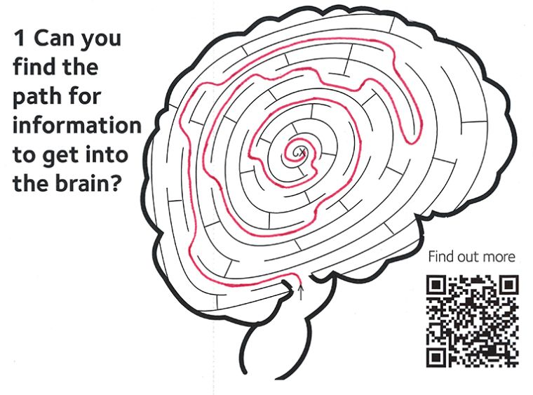 Image showing the solution for a maze to get information into the brain.