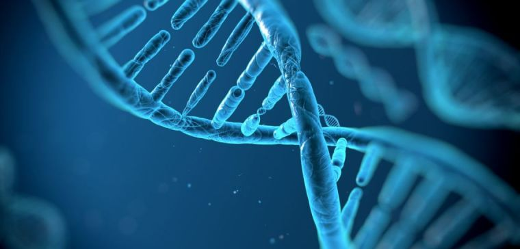 Study decodes gene function that protects against type 2 diabetes