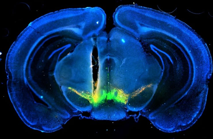 How the brain learns from making difficult decisions