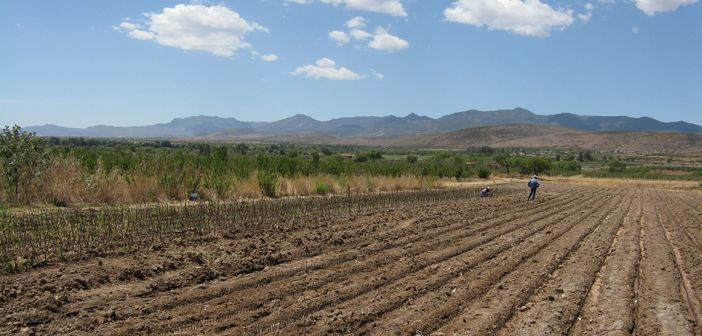 Migrants who worked in agriculture in California have introduced new techniques to farms in Zacatecas, Mexico