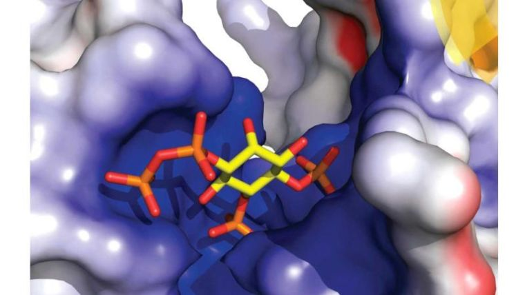 Potter group paper fronts latest issue of med chem comm